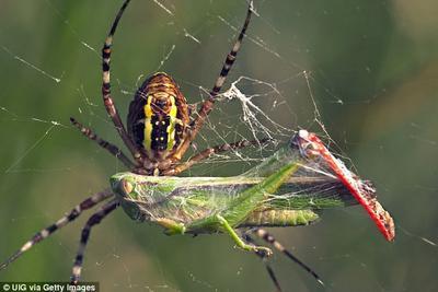 全球蜘蛛每年可捕食8亿吨昆虫 促进自然生态平衡