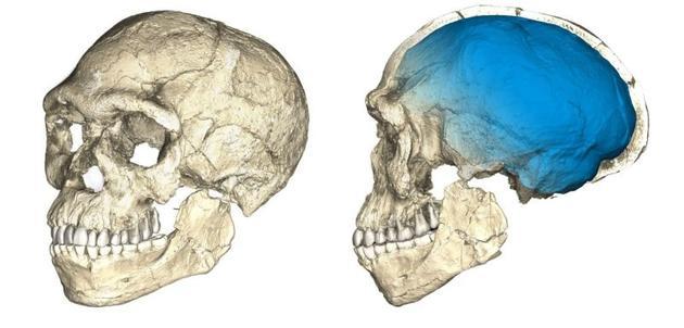 图为两张根据摩洛哥发现的智人化石扫描结果合成的颅骨图片。