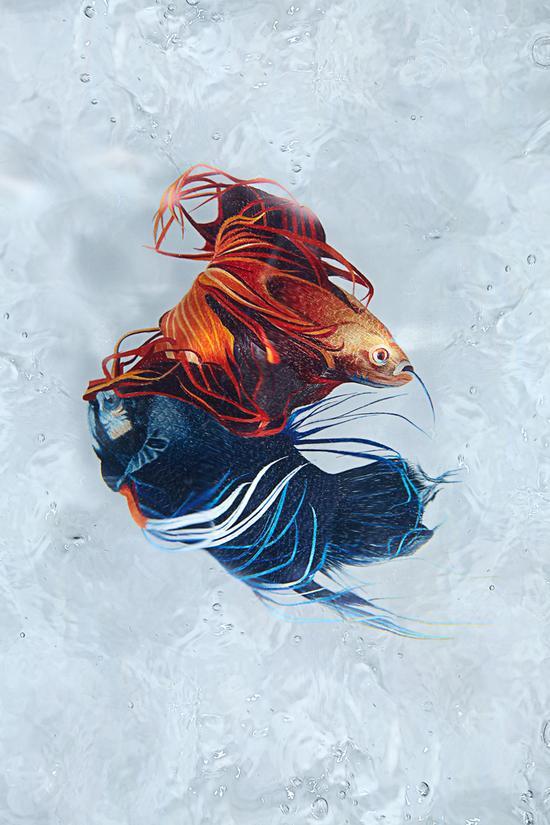 摇曳的水波纹和游弋的金鱼充满了动态之美