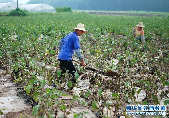 九江县暴雨过后忙重建(组图)