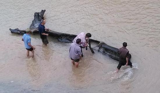 图为村民在河中打涝出土的乌木。苏忠国