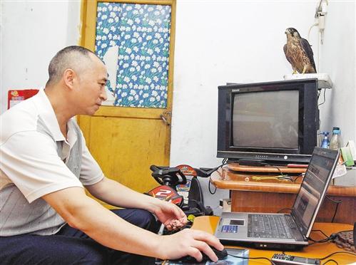 雀鹰陪伴着刘开全上网