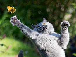 动物摄影:悬浮的喵星人