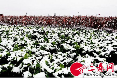 0月11号8点30分左右,定边县飘起雪花,这是我省入冬来第一场大雪