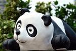 南长街萌熊猫总动员