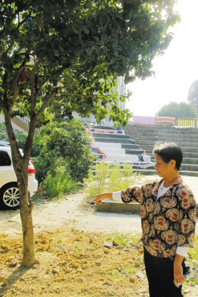 居民说,这么大的树都要被挖掉了。记者 边城雨 摄