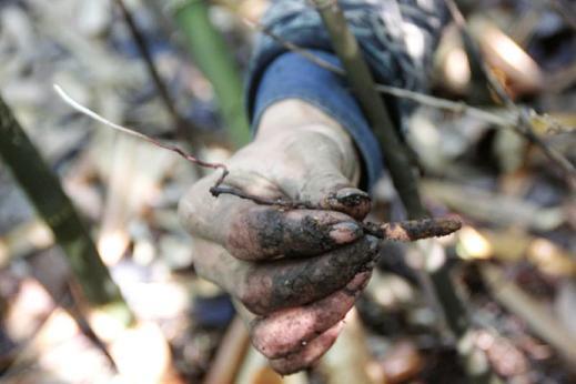 """刚从地里挖出来的疑似""""虫草""""的生物"""