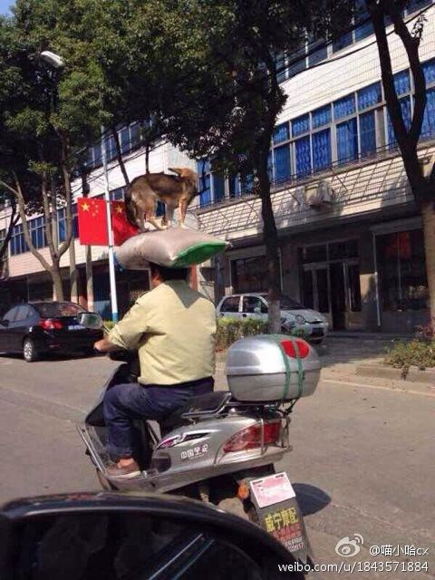 慈溪顶狗哥网络走红 骑着电动车头顶大米和狗