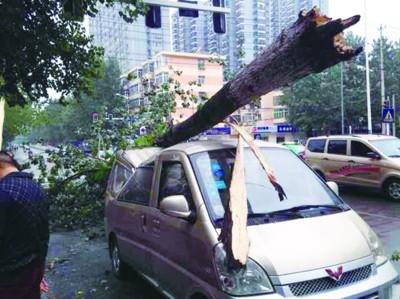 面包车被倒下的大树砸瘪