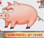 猪受惊吓揣飞主人
