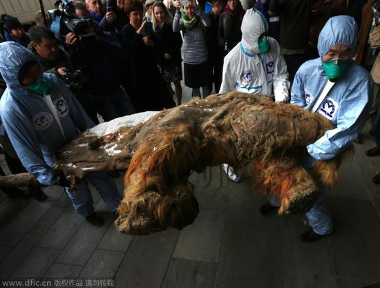莫斯科展出冰封3.9万年长毛象