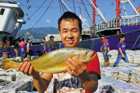 最近,在象山石浦,有渔船捕获了一条特大野生黄鱼,据称重达5斤。 通讯员 谢定伟 摄