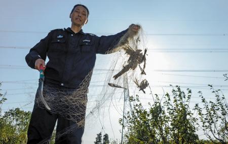 昨天下午,在镇海庄市的一处果园中,森林公安执法人员在拆除鸟网。记者 徐佳伟 摄