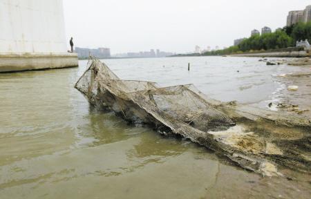 退潮时,青林湾大桥下露出来的地笼网。记者 许天长 摄