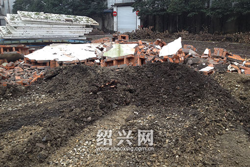 网曝绍兴三中百年大树遭砍 树桩连夜被运走