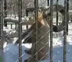 大熊动物园里练功夫