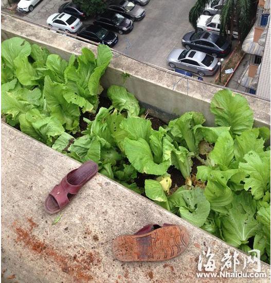 老伯小区顶楼菜园劳作 坠下7楼当场死亡