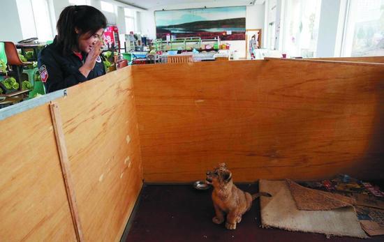 工作人员说,他们也没有想到,带小狮子外出看病,能引发这样一场舆论风波。
