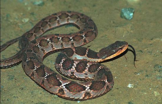 洛阳小学门口现2米长花蛇吓坏路人(图)