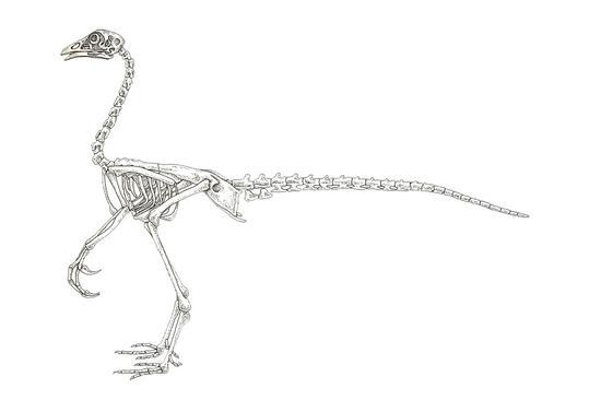 """古生物学家杰克·霍纳认为,通过基因工程的方法,我们能复活一种小型恐龙,他称之为""""鸡恐龙""""。"""