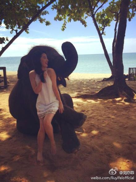 刘亦菲和大象玩耍