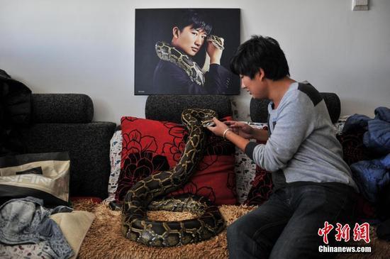 昆明蟒蛇少年与25条蛇同居10年