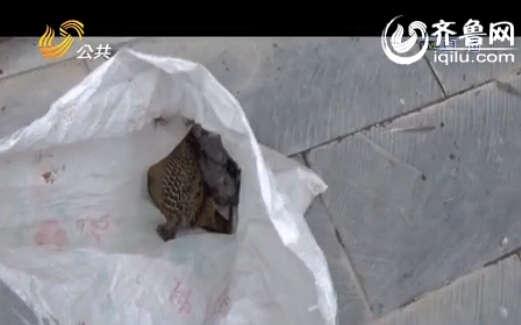 民警随后还从院内的一个袋子内搜出了还没来得及处理的野鸡(视频截图)