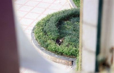 从楼上住户家中看到坠亡女子躺在花坛中