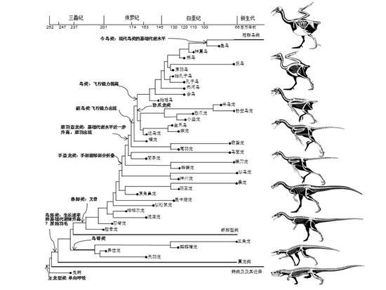 从恐龙到鸟:中科院科学家发表鸟类起源综述|鸟类|恐龙|演化_科学探索_新浪科技_新浪网