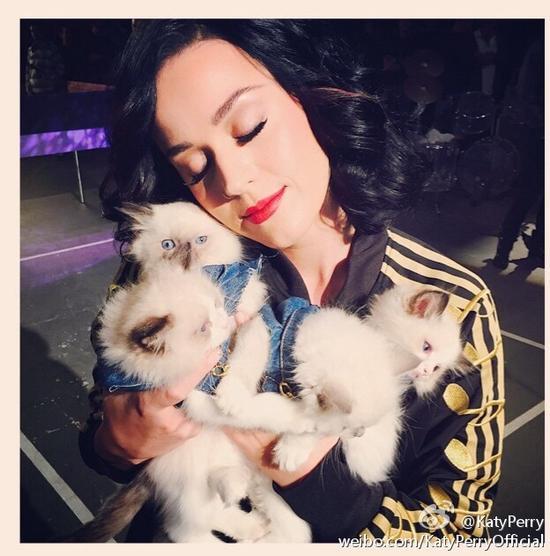 水果姐怀抱猫咪