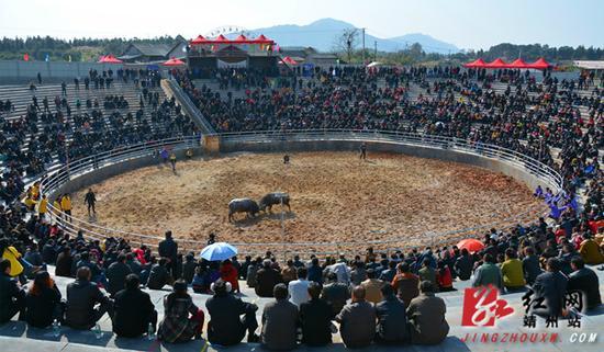 12月12日,湖南省靖州苗族侗族自治县国际民族文化斗牛场,数千群众观看斗牛比赛。   刘杰华  摄