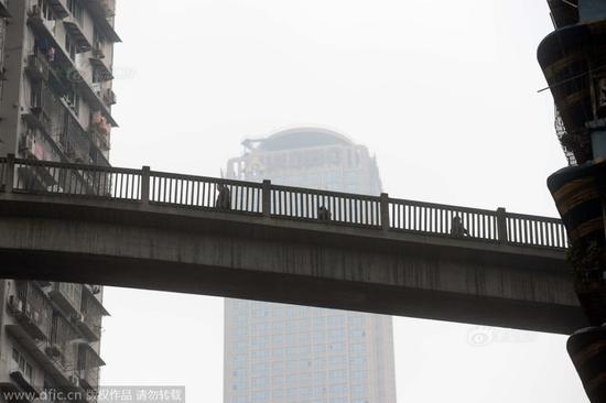 """重庆现最""""任性""""天桥 13层高穿楼房而过"""