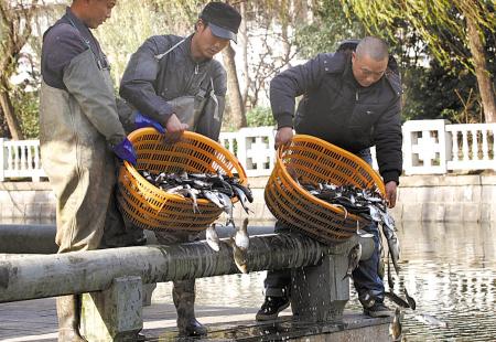 昨天下午,市内河处员工正在中塘河放流鱼苗。(胡建华 摄)