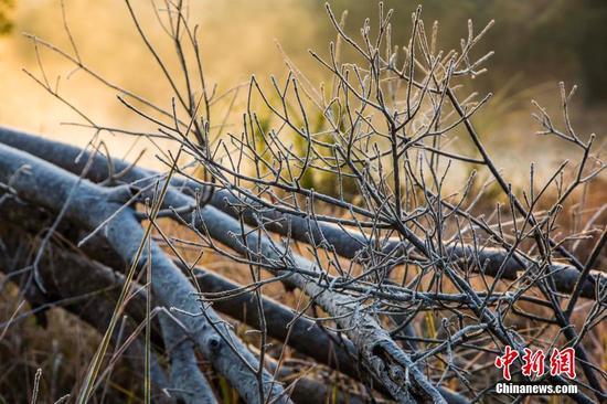 福建武夷山出现霜冻 宛如仙境令人流连