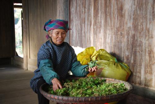 图为廖老太捡晒当天挖来的药材。
