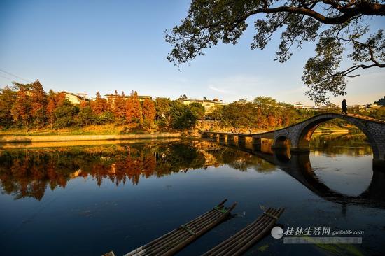 穿山小街旁的水杉红了,在小东江和拱桥的映衬下格外美丽。