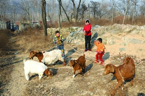 """""""奥运""""跟姐姐、三叔家的妹妹在放羊"""