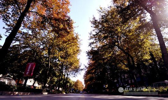 火红枫叶包裹下的西凤路。