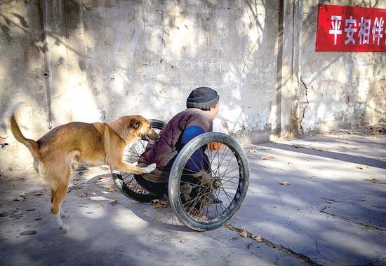 洛阳忠犬推修鞋匠上街摆摊 天冷还会给主人暖脚