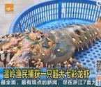 渔民捕获七彩龙虾