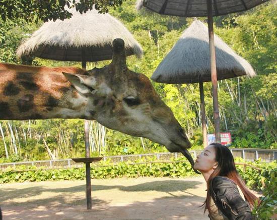 倪妮与长颈鹿