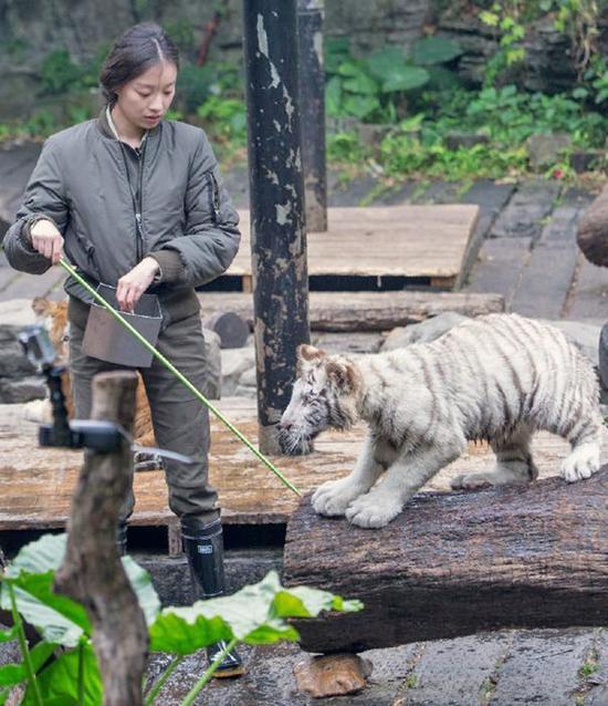 倪妮与小老虎