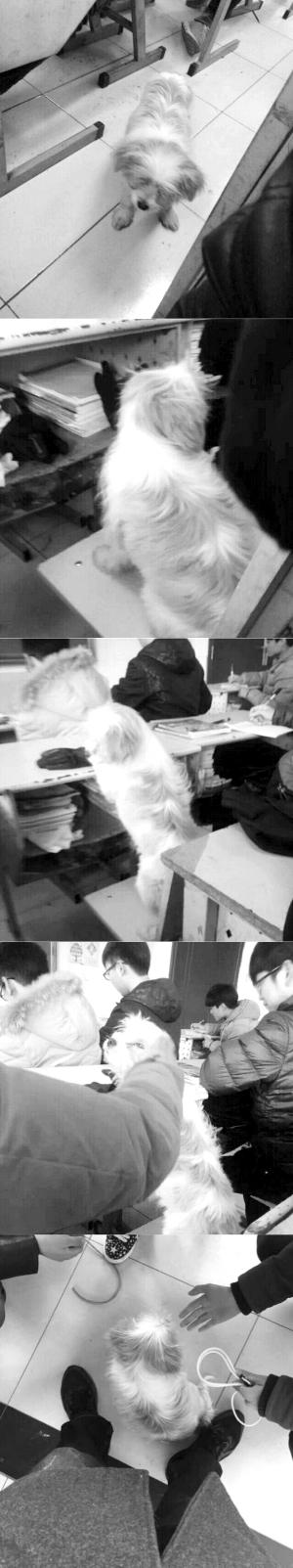 """流浪狗曾是学生们的""""开心果""""。网络截图"""