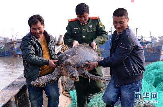 渔民和边防民警在运送准备放生的海龟。新华社发