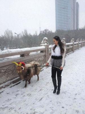 个衣着时尚的姑娘牵着一只装扮漂亮的羊走在乌市西大桥上。