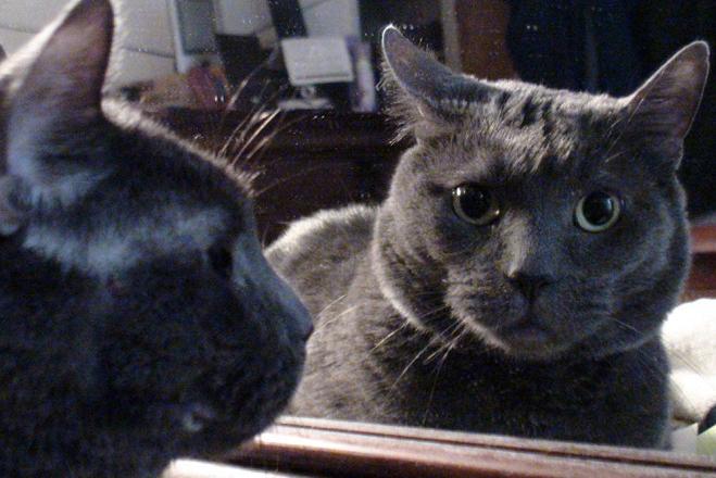 我们为何会讨厌照片中的自己:镜子撒了谎