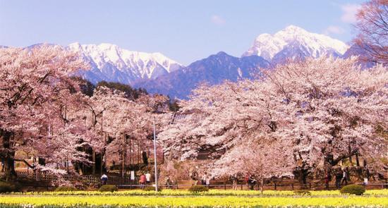 2015日本赏樱季节花期预报汇总