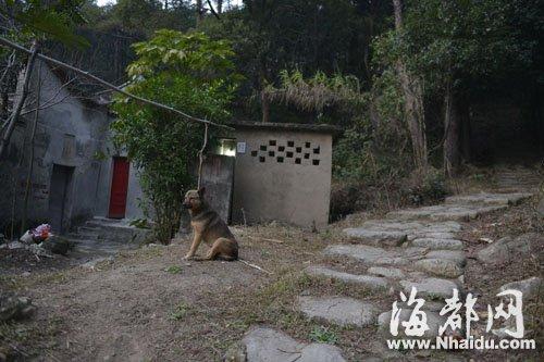 爷孙遇害,一条狗一直守在事发的屋子前