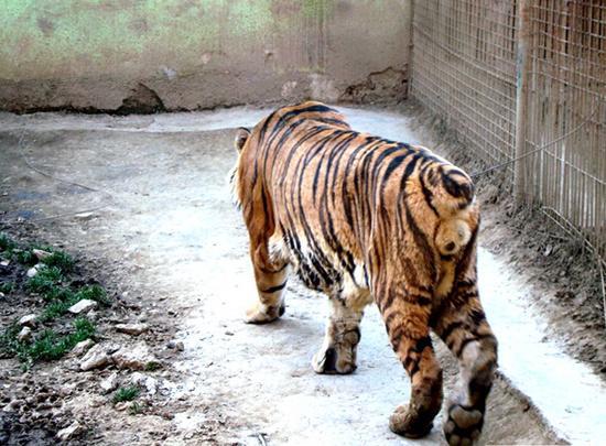 老虎乐园是什么