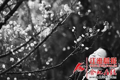 小男孩沉浸在梅花的花香中。